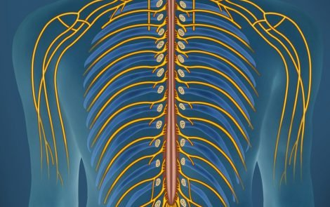 Late-onset FAP Patients Commonly Show Involuntary Nerve and Heart Abnormalities, Study Finds