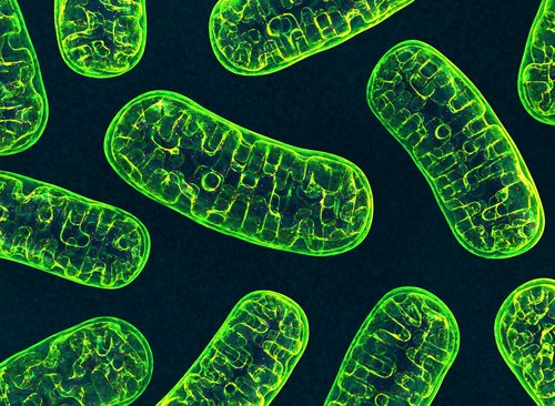 Portuguese Study Links Extra Copies of Mitochondrial DNA to Earlier Development of FAP