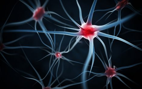 Lengthening of Amyloid Fibrils May Lead to Nerve Cell Loss in FAP Patients, Study Suggests